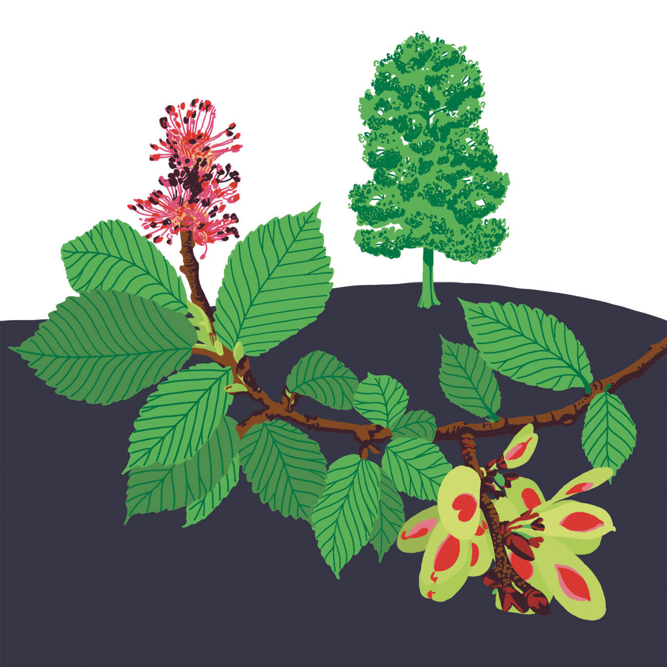orme champêtre parc botanique de Branféré