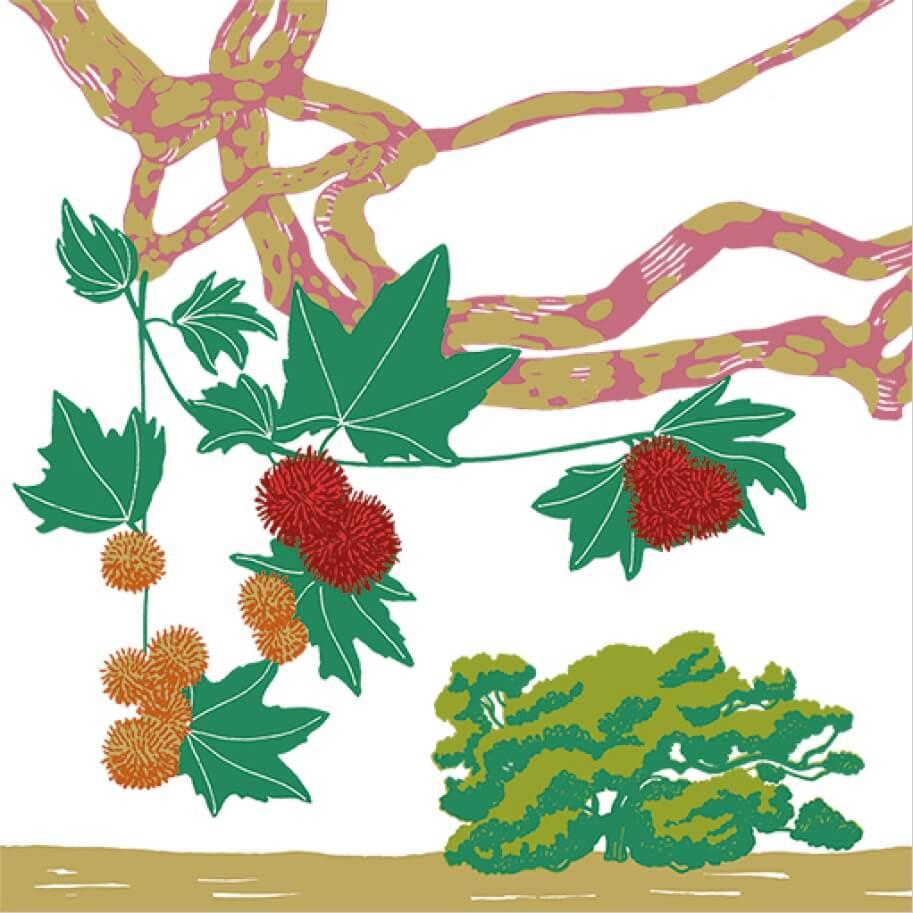 Le Platane pleureur d'Orient parc botanique de Branféré