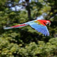 perroquets spectacle oiseaux