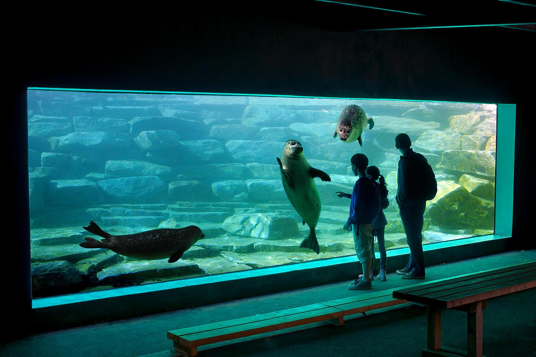 phoque espace marin branféré