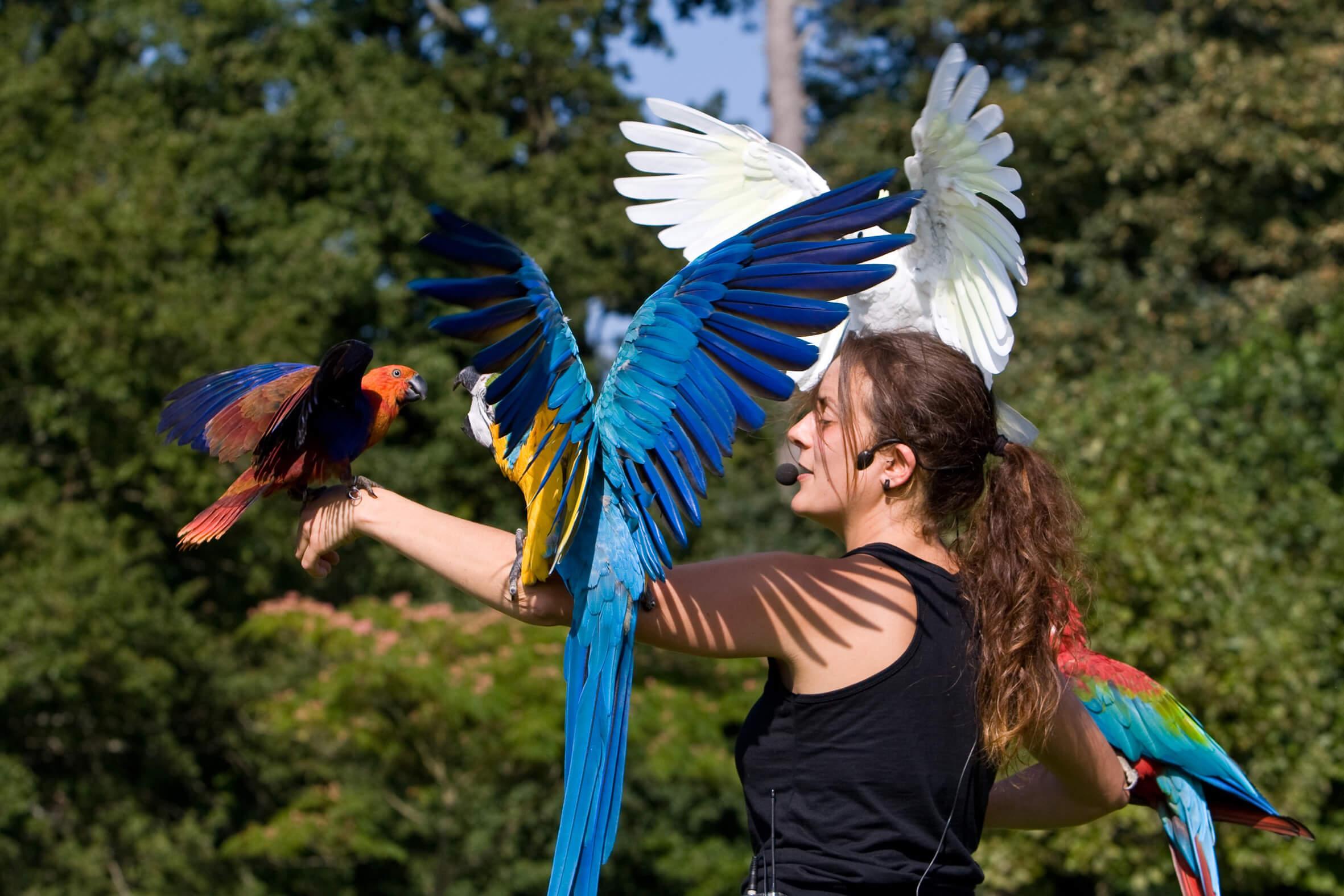 photothèque spectacle oiseaux parc branféré