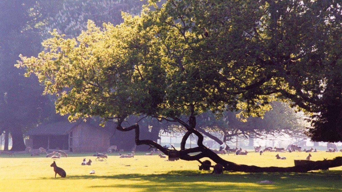 branfere parc chateau