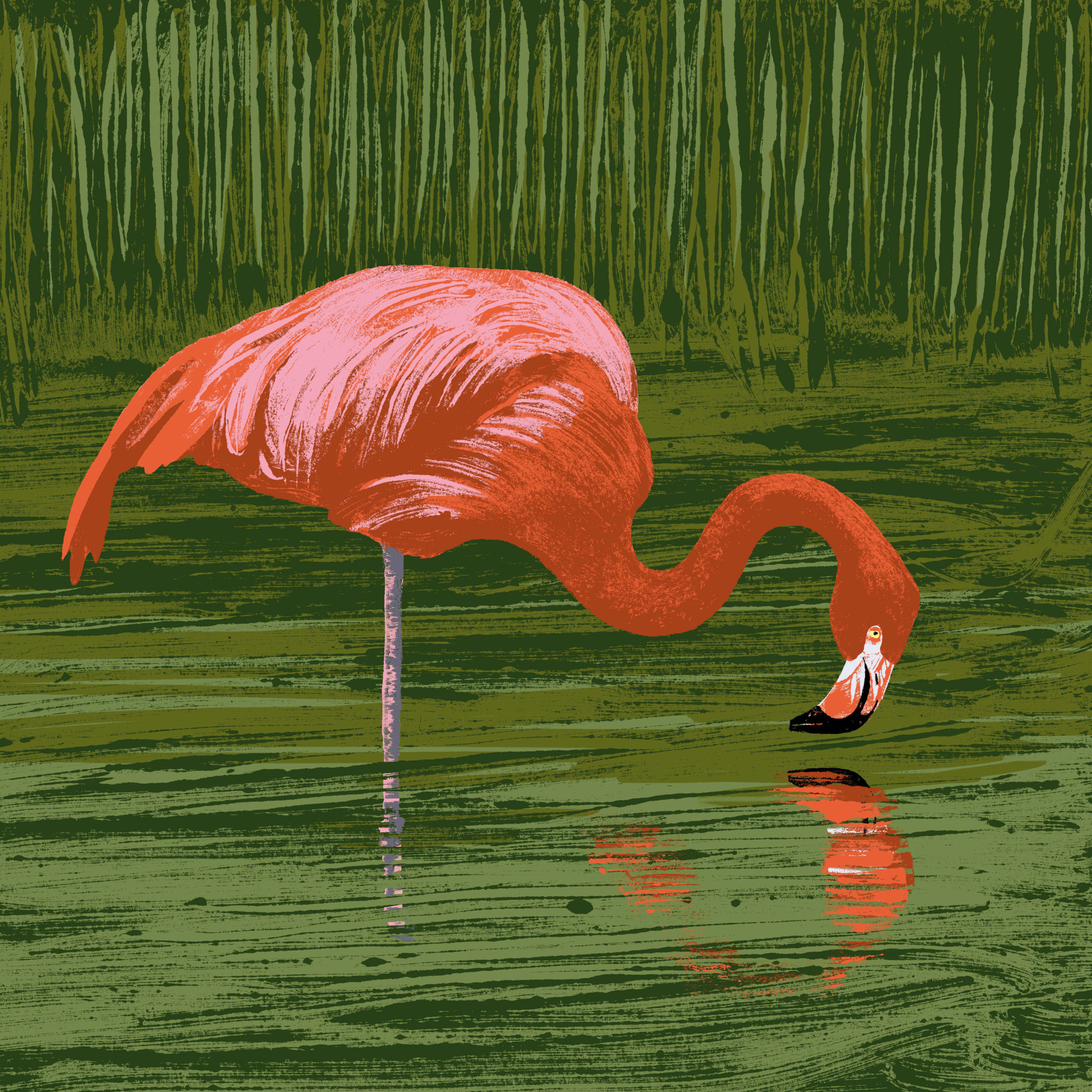Le flamant de Cuba parc animalier de Branféré
