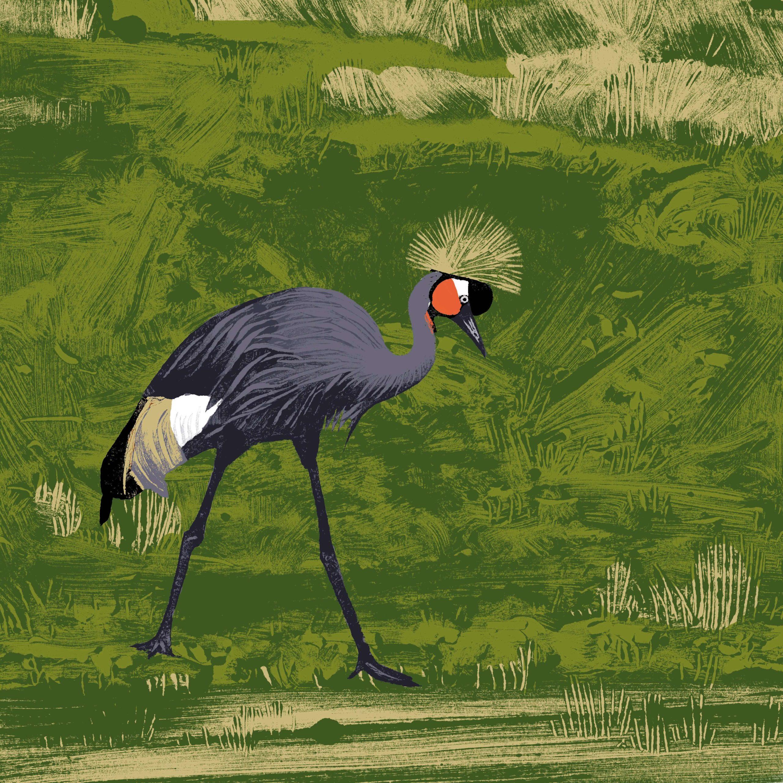 La grue couronnée noire parc animalier de Branféré